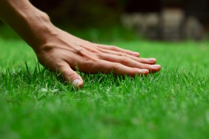 Lawn care salt lake city