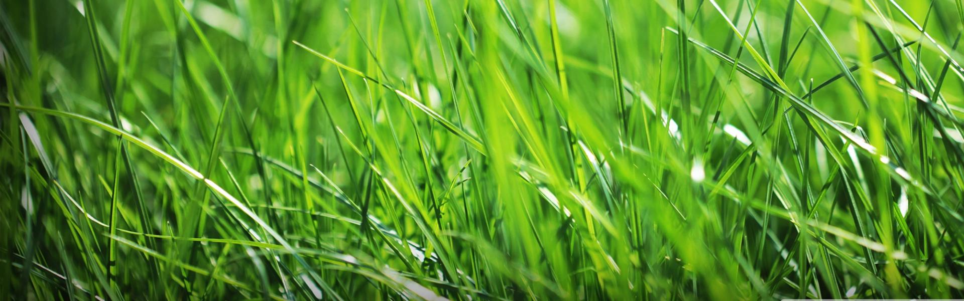 slide-4-lawn-care