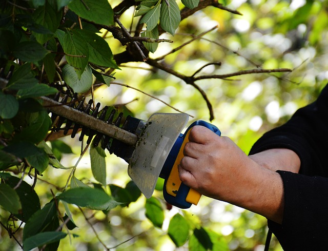 Give your trees, shrubs and bushes what they need.