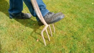 The hard way to aerate your lawn.